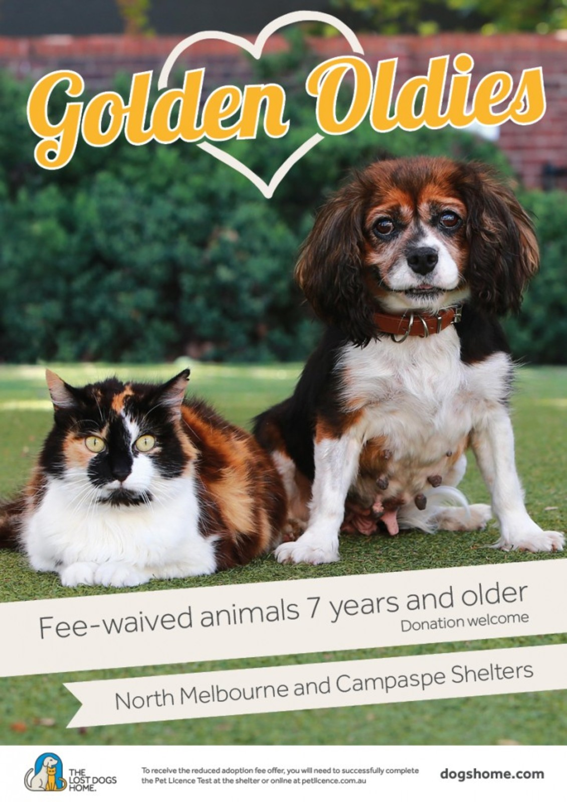 GOLDEN OLDIES: Help give senior dogs <br/> and cats a loving home