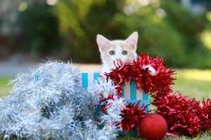 THANK YOU: Donations of Christmas cheer