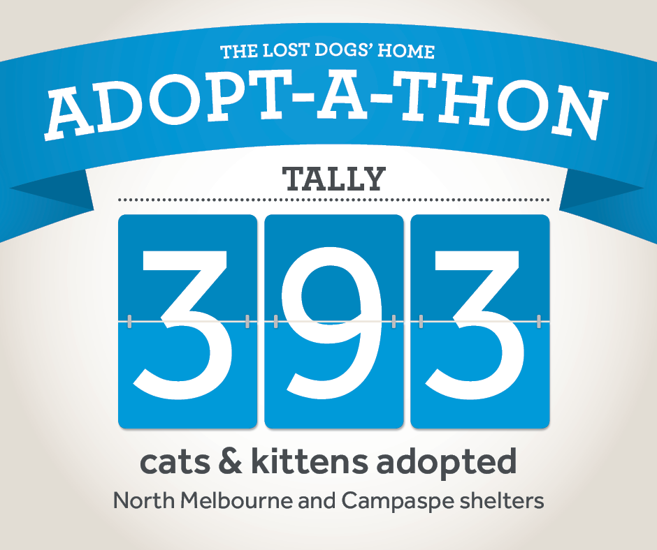 ADOPT-A-THON: 393 felines find new homes