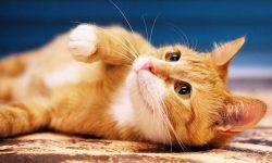 LDH-Catibbean-summer-cat-adoption-drive-featured4