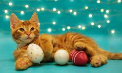 LDH-cat-kitten-adoption-promotion-April-2017