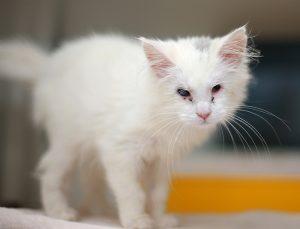 LDH-BK-blind-kitty
