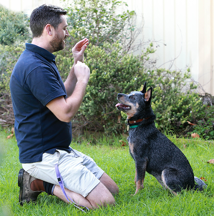 The Sky S The Limit For Deaf Dog Bluebell