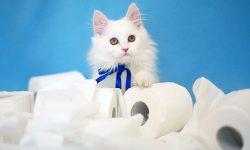 LDH-Norman-1029744-KIIS-Kleenex-Kitten-featured