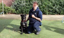 Hunter has learnt many skills with the help of our behaviour team, and is now ready to show them off in a new home.